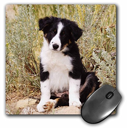 3dRose Mauspad Border Collie Puppy Dog Na02 Pwo0040 Piperanne Worcester (mp_140297_1) von 3dRose