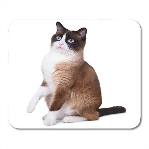 "Gaming Mauspads, Gaming Mouse Pad Brown Snowshoe Cat Sitting and Looking Upwards One Paw 11.8""x 9.8"" Decor Office Nonslip Rubber Backing Mousepad Mouse Mat von HOTNING"