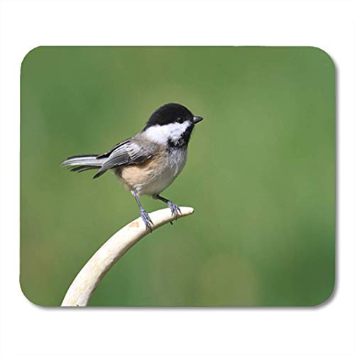 "HOTNING Gaming Mauspads, Gaming Mouse Pad Green Bird Black Capped Chickadee Poecile Atricapilla on Antler Colorful 11.8""x 9.8"" Decor Office Nonslip Rubber Backing Mousepad Mouse Mat von HOTNING"