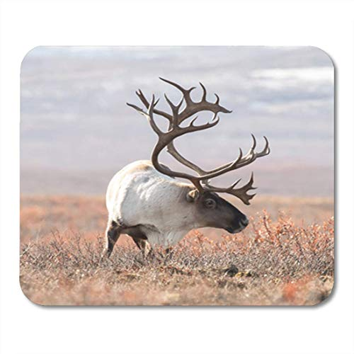 "HOTNING Gaming Mauspads, Gaming Mouse Pad Wildlife Big Caribou in Alaska Tundra Denali Yukon Alaskan Animal 11.8""x 9.8"" Decor Office Nonslip Rubber Backing Mousepad Mouse Mat von HOTNING"
