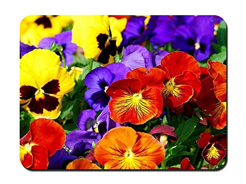 BGLKCS Pansies - Flower- #31087 Mauspads Customized Rectangle Non-Slip Rubber Mousepad Gaming Mauspads 8.6x7.1 Inches von HYYCLS