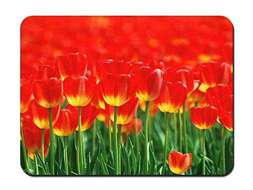 BGLKCS Red petals - Flower- #31123 Mauspads Customized Rectangle Non-Slip Rubber Mousepad Gaming Mauspads 8.6x7.1 Inches von HYYCLS