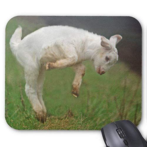 Funny Goat Baby White Goat Jumping in Pasture Mouse Pad von Nizefuture