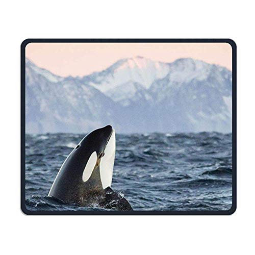Killer Whale Gaming Mouse Pad Custom Design Non-Slip Rubber Mouse Mat for Desk,Laptop von Nizefuture